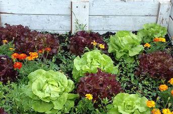 Projet de jardinage des internes de ND Sion